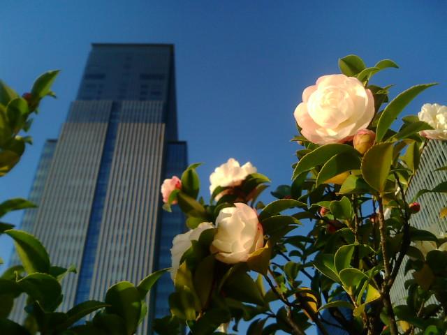 都会の花〜