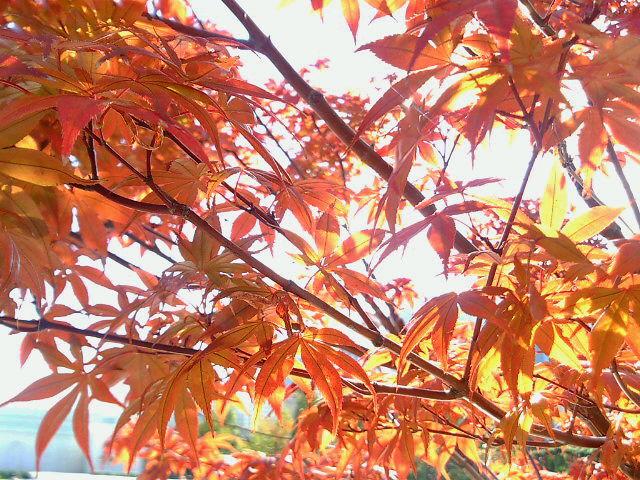 空と秋in東京☆